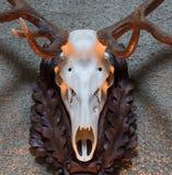 Большой трофей звероловства оленей Стоковые Изображения RF