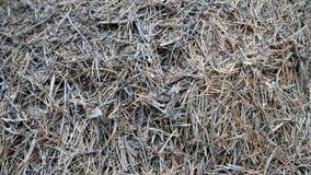 Большой холм муравья видеоматериал