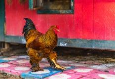большой цыпленок Стоковые Изображения RF