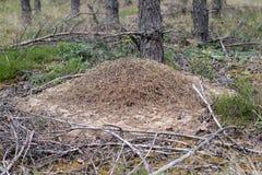 Большой anthill в coniferous насыпи леса a inse леса стоковая фотография