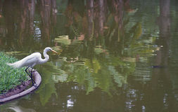 Большой egret на озере Стоковая Фотография RF