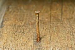 Большой longrusty коричневый ноготь в деревянной доске стоковые изображения