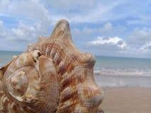 Большой seashell на песке морем стоковая фотография rf