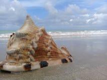 Большой seashell на песке морем стоковые фотографии rf