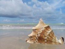 Большой seashell на песке морем стоковая фотография