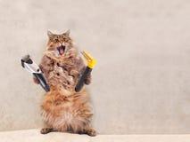 Большой shaggy кот очень смешное положение groomer 11 Стоковая Фотография