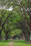 Большой Tress в красивом лесе на горе в Таиланде стоковые изображения