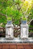 Бонзаи, сиамский грубый куст в баках фарфора Стоковое Изображение RF