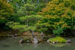 Бонзаи смотрят деревья в японском саде, сады Гамильтона ботанические Стоковое Изображение RF