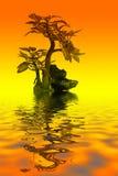 бонзаи Стоковое Изображение RF