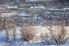 бореальная пуща снежная Стоковые Фотографии RF