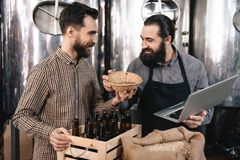 Бородатый винодел обнюхивает хмели в корзине пива на винзаводе Проверять качество хмелей пива Стоковые Фото