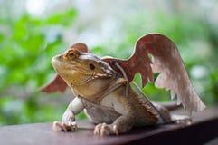 Бородатый дракон в крылах Брайна Стоковые Фотографии RF