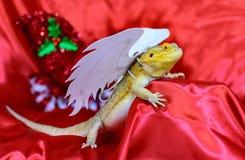 Бородатый дракон с белыми крылами Стоковое фото RF