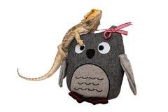 Бородатый дракон сидя на игрушке сыча Стоковое фото RF