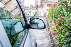 Бортовое зеркало припаркованного автомобиля Стоковые Изображения RF