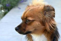Бортовой портрет маленькой собаки щенка стоковое изображение rf