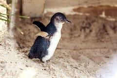 Бортовой профиль маленького пингвина Стоковые Фото