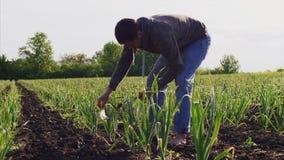 Босоногий человек на поле срывает зеленый чеснок и очищает его от сухих листьев и грязи акции видеоматериалы