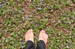 Босые ноги женщины между фиолетовыми цветками Стоковые Изображения