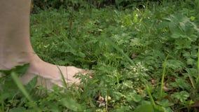 Босые ноги мальчика идя вдоль зеленой травы в дне лета солнечном акции видеоматериалы