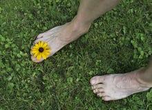 Босые ноги на траве Стоковое фото RF