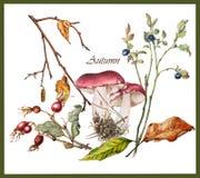 Ботаническая иллюстрация заводов осени Стоковое фото RF