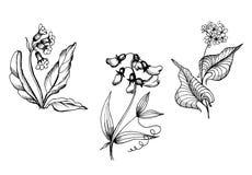 Ботаническая иллюстрация monochrom wildflowers иллюстрация вектора