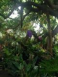 Ботанические джунгли стоковые фотографии rf