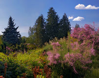ботанические сады Стоковое Изображение RF
