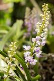 ботанический, ботаника, букет, ветвь, яркая, бутон, чистый, конец-u Стоковая Фотография