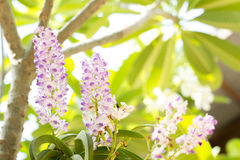ботанический, ботаника, букет, ветвь, яркая, бутон, чистый, конец-u Стоковая Фотография RF
