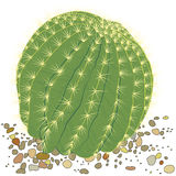 Ботанический завод кактуса Стоковое Изображение RF