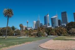 Ботанический сад в Сиднее с небоскребами Стоковые Изображения RF