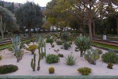 Ботанический сад кактусов, столетников и succulents стоковое изображение