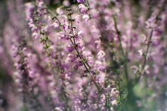 Ботанический сад, план, предпосылка, красивая, цветене, цвет, поле, флора, цветок, природа, весна, лето, лето, стоковые изображения
