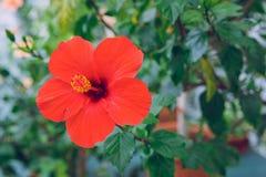 Ботанический сад с деревьями и цветками Фото природы и перемещения Стоковое Изображение RF