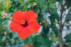 Ботанический сад с деревьями и цветками Фото природы и перемещения Стоковые Фото
