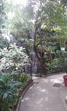 ботанический сад стоковые изображения
