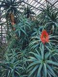 Ботанический сад, алоэ, джунгли, растительность Стоковое фото RF