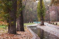 Ботанический сад в дожде Стоковая Фотография