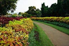 Ботанический сад в Шри-Ланке стоковое фото rf