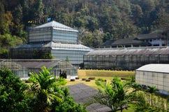 Ботанический сад в Chiangmai Таиланде Стоковые Фотографии RF