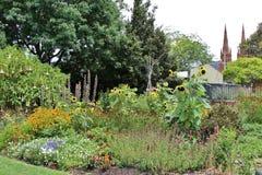 ботанический сад королевский Сидней Стоковое Фото