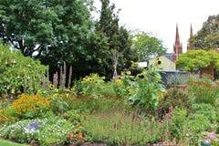 ботанический сад королевский Сидней Стоковые Фото