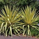 ботанический сад королевский Сидней Стоковая Фотография RF