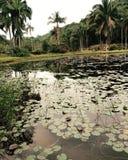 Ботанический сад Сан-Паулу Стоковое фото RF