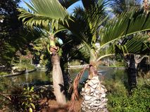 ботанический сад Стоковое Изображение RF