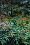 Ботанический сад Landcsaping с апельсином Стоковые Изображения