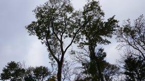 ботанический сад vladivostok Primorye Россия Стоковые Фотографии RF